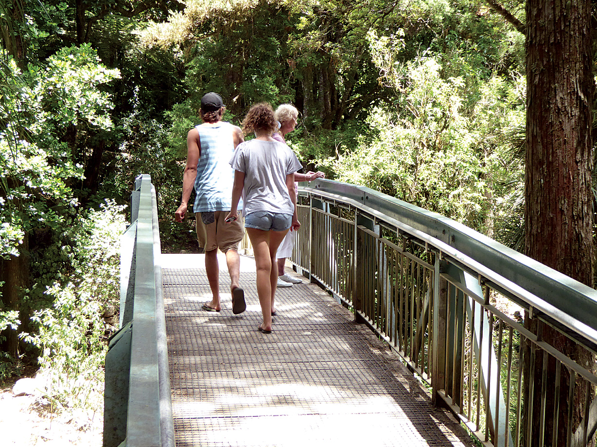 Whangarei Falls – A walk not to be missed